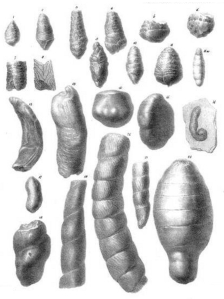William Buckland Fossil Faeces (Coprolites).